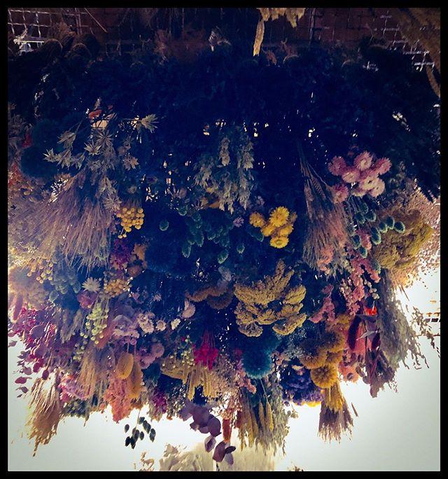 #chezbuly1803#fleurssechees#beauténaturelle