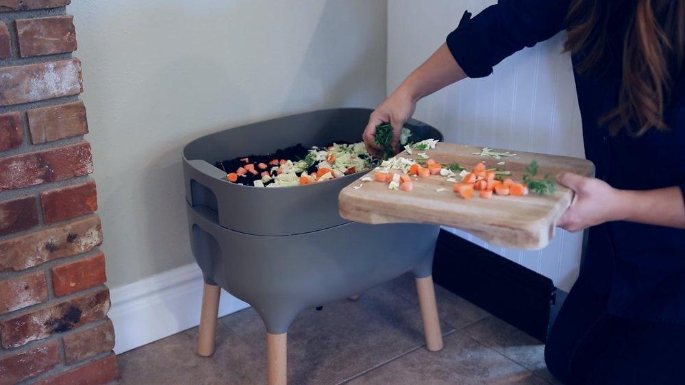 Compostera domestica.jpg