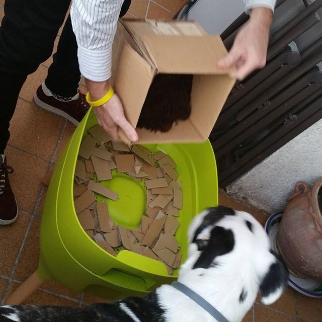 Preparando la ropa de cama para las lombris de la compostadora de una amiga, me ha salido esta ayudanta. - Gracias a su atenta supervisión he podido colocar perfectamente la fibra de coco. - ¡Dejad que los animales se acerquen al compostaje! 🔝🐕 - - - - - #vermicompost #compostadoraurbana #compost #lixiviados #huertoencasa #residuocero #huertourbano #zerowaste