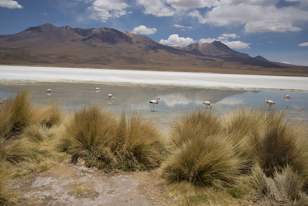 Two types of flamingos graze the water in the Altiplano.