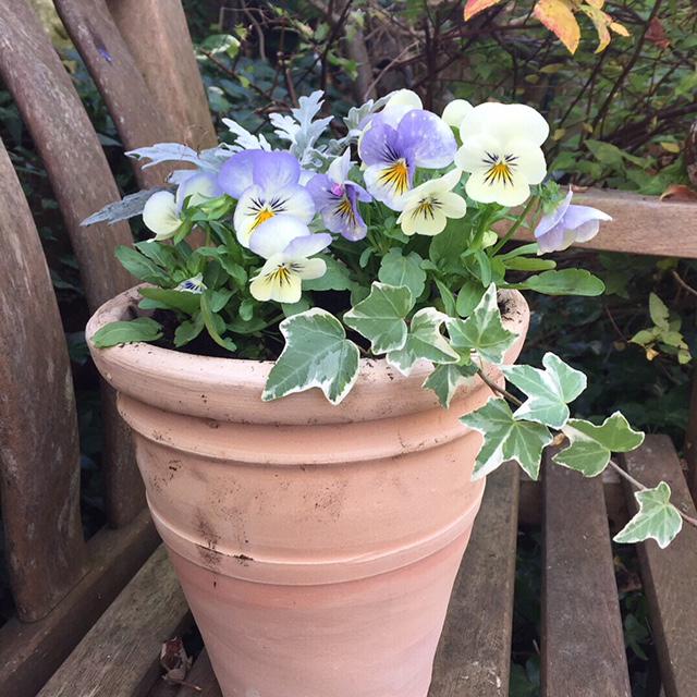 Winter gift pots 4.JPG