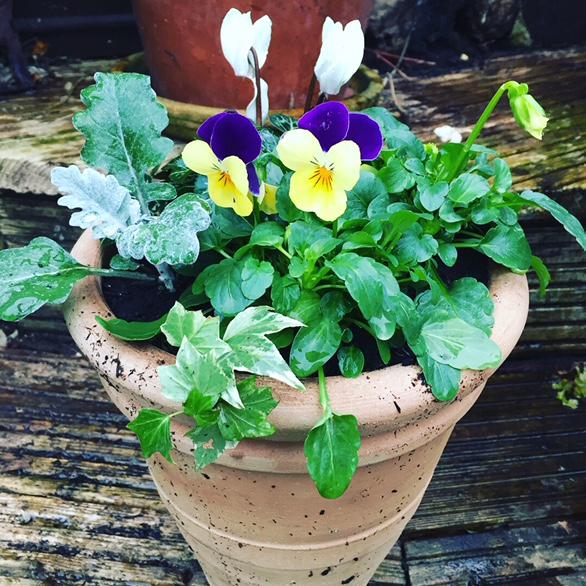 Winter gift pots 7.JPG