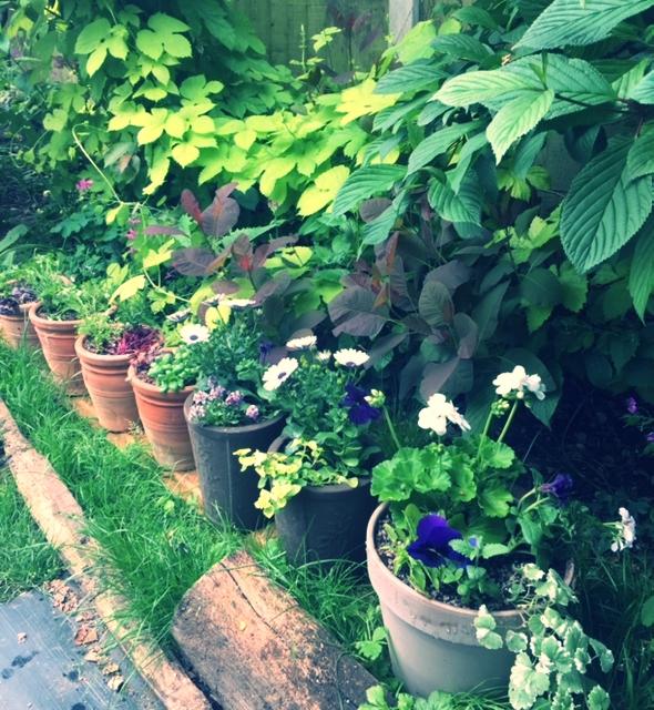 May16 Pots