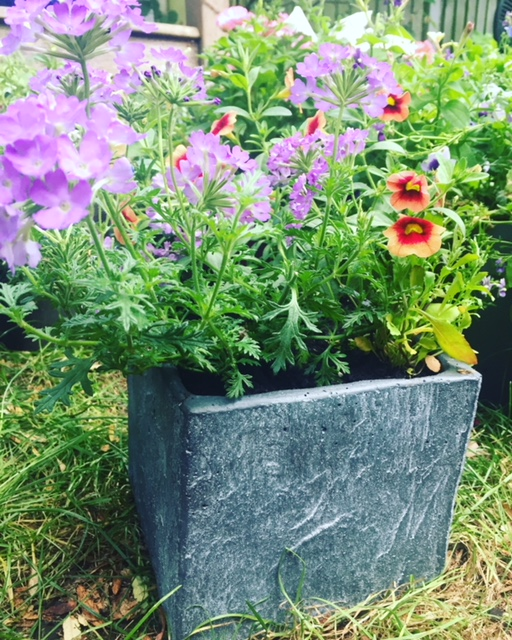 My mini slate pots & troughs have always gone down well. This is the last one I have so do come and give it a home this Sunday!