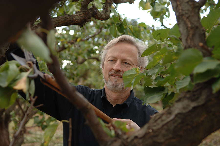 Robert Olson pruning the apricot trees in his garden at home in Los Altos. Along with his brother-in-law Peter Granoff, they set up wine retailer Virtual Vineyards in 1995.