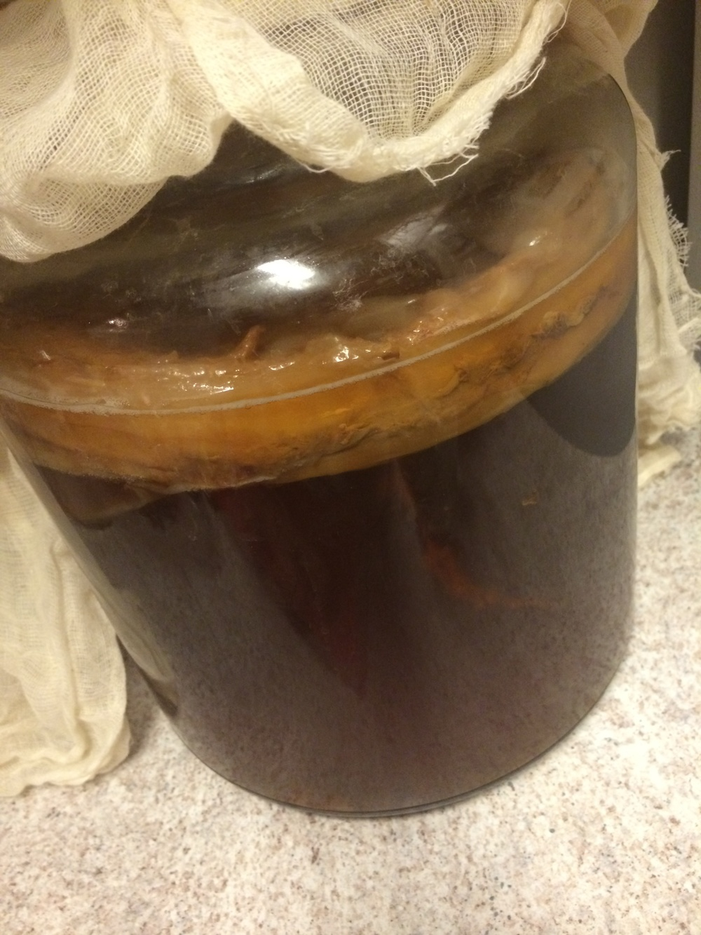 SCOBY's aren't the prettiest things