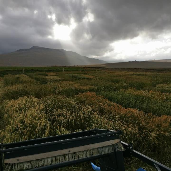 KornskurðurVopnafirði2017.jpg