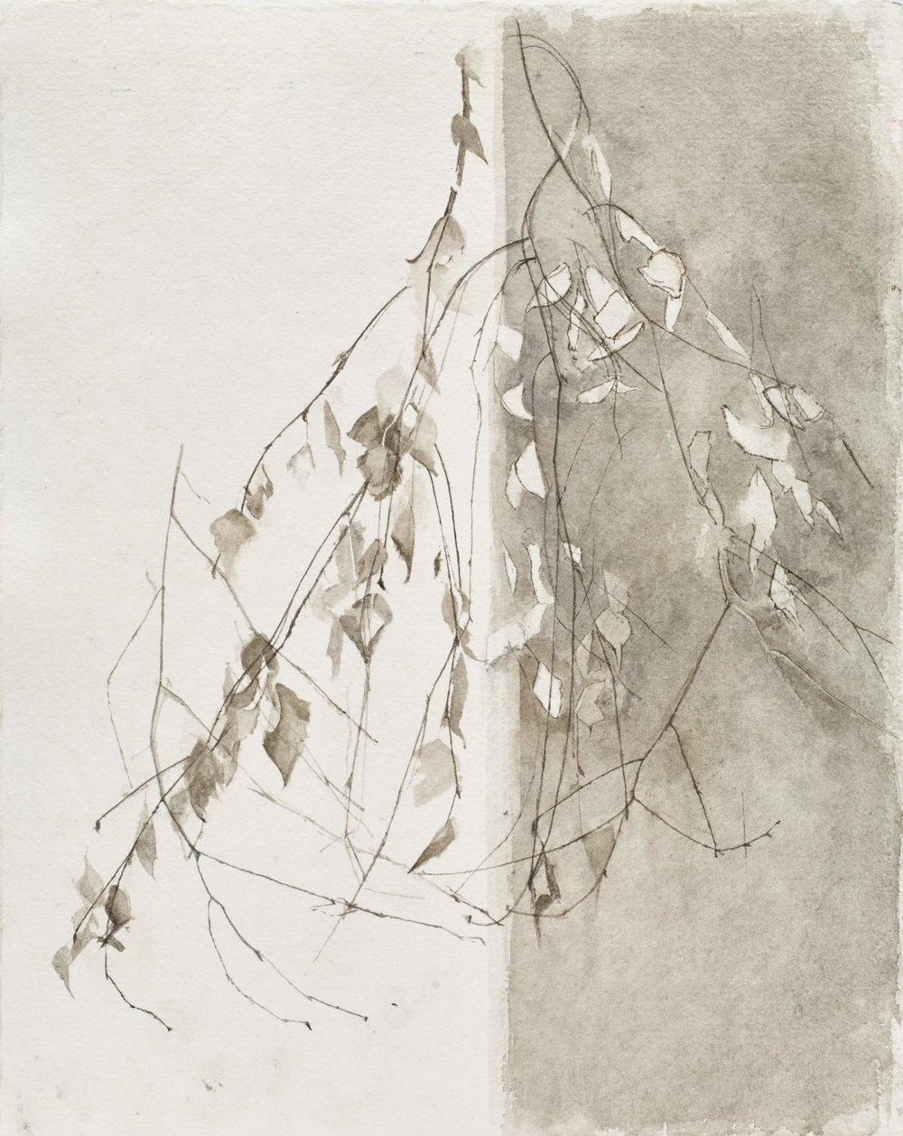 </strong><em>Birch Leaves</em> <br/> 2015 <br/> watercolour<br/>52 x 42cm <strong>