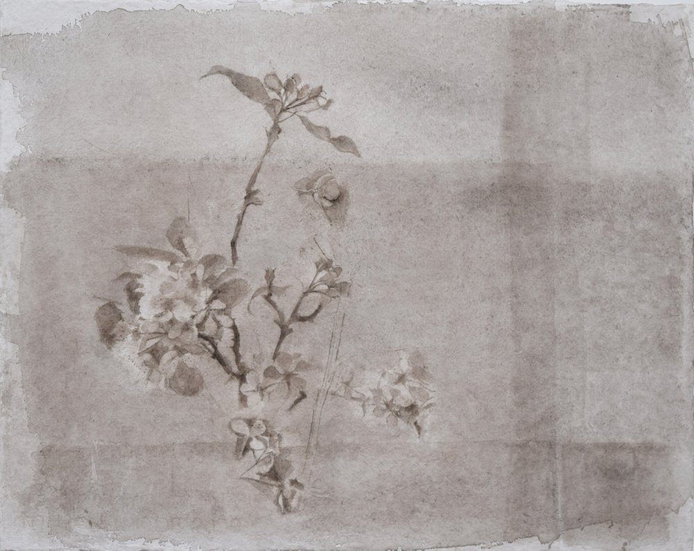 </strong><em>Pear and Apple Blossom</em> <br/> 2015 <br/>watercolour<br/>42 x 52cm <strong>