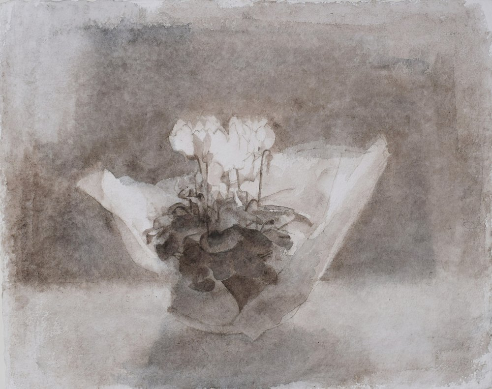 </strong><em>Cyclamen in Tissue</em> <br/> 2013 <br/> watercolour<br/>42 x 52cm <strong>