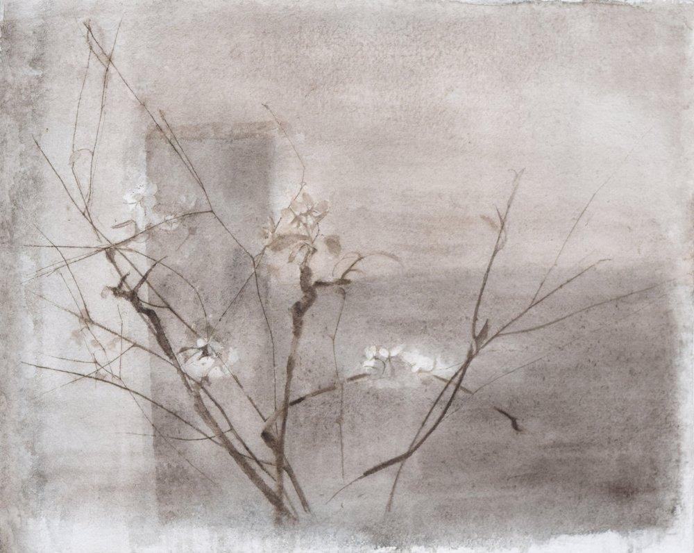 </strong><em>April Blossom</em> <br/> 2013 <br/> watercolour<br/>42 x 52cm <strong>