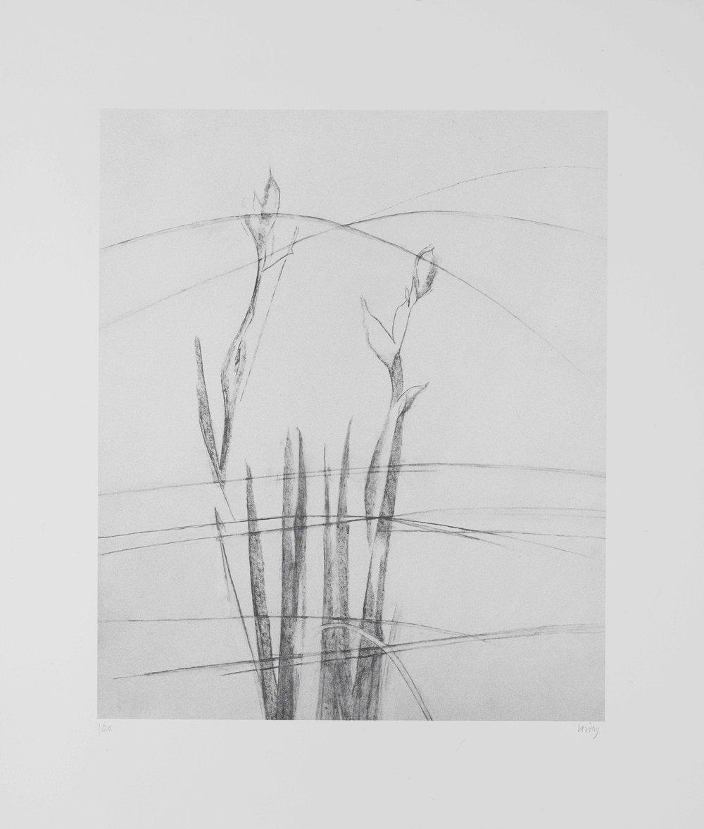 Irises and Grasses  2017 lithograph 41 x 35 cm