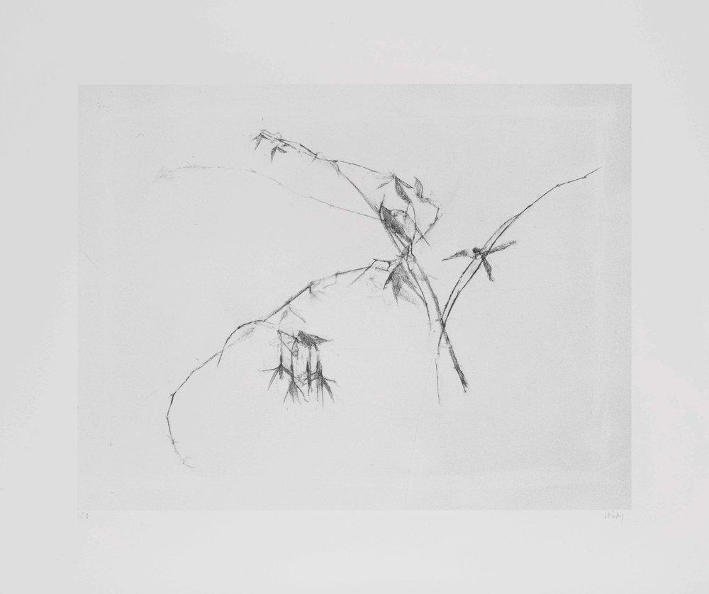 Wil Fuchsia   2017 lithograph 38 x 45 cm