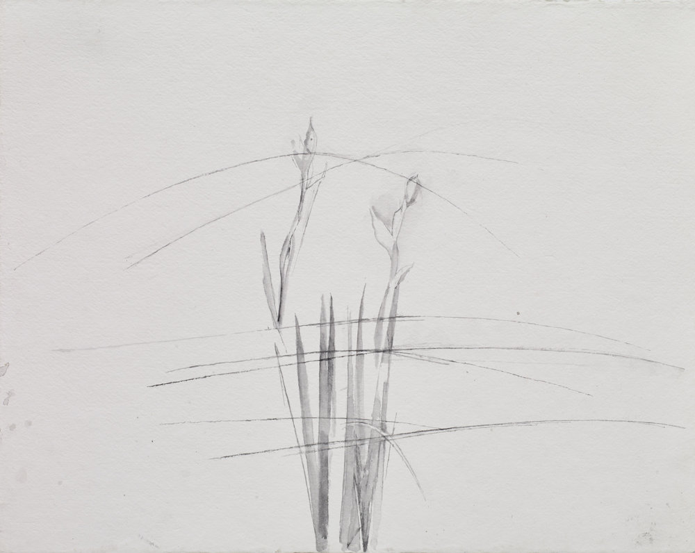 </strong><em>Irises, Grasses</em> <br/> 2017 <br/> watercolour<br/>41 x 52cm <strong>