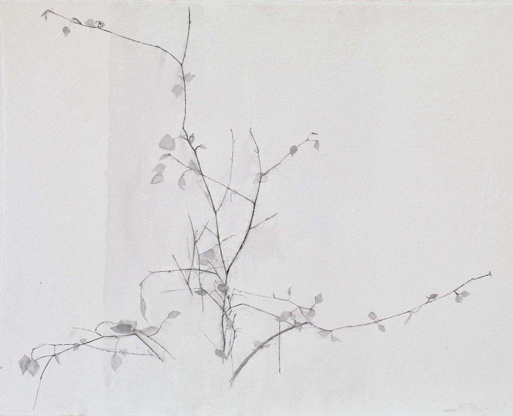 New Leaves, 2017, watercolour, 38 x 45 cm