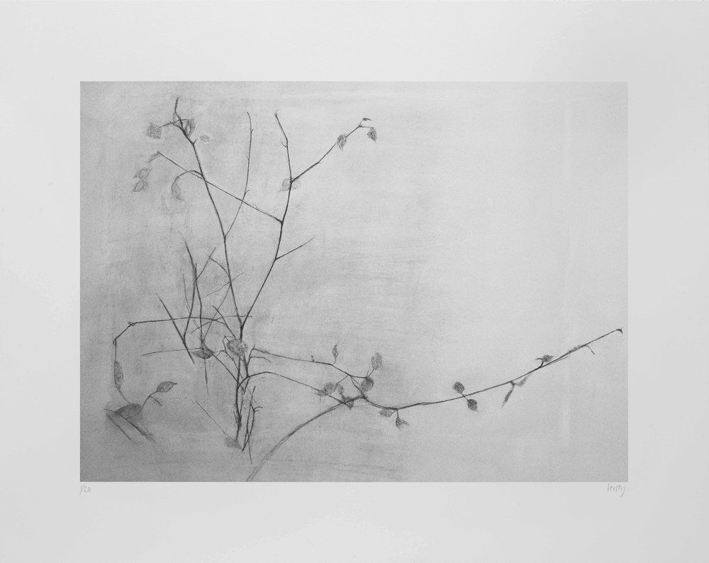 New Leaves  2017 lithograph 38 x 45 cm