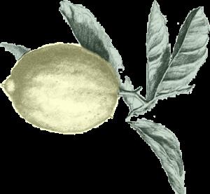 BLN-lemon-300x277.png