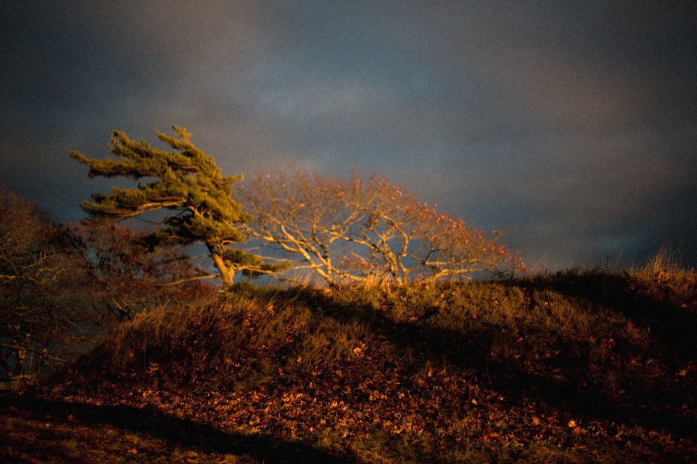 Autumn Aura