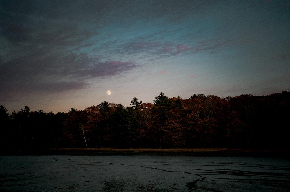 Birch on Cousins Island