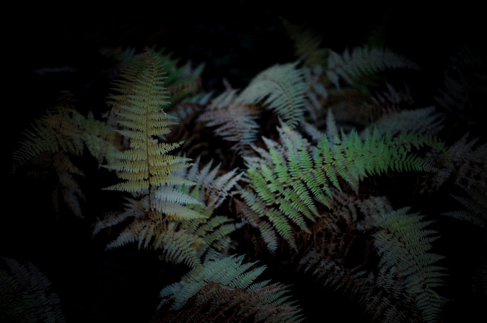 Ferns On Black