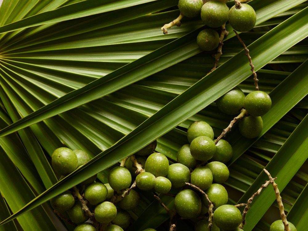 +++Bay-Header---Saw-Palmetto_109555_V2_QC.jpg