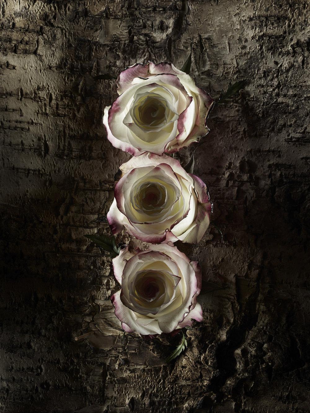 Burned_Roses-8.jpg
