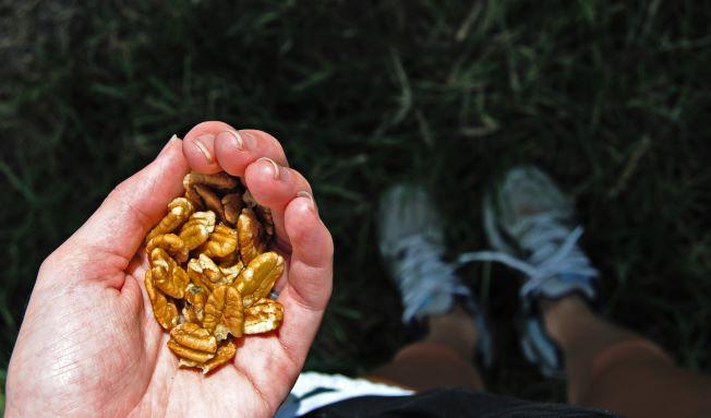 healthy_handful_of_pecans