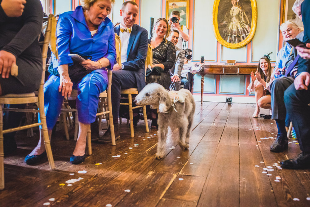 George the dog brings the rings down the aisle!  (Image:  Damien Vickers )