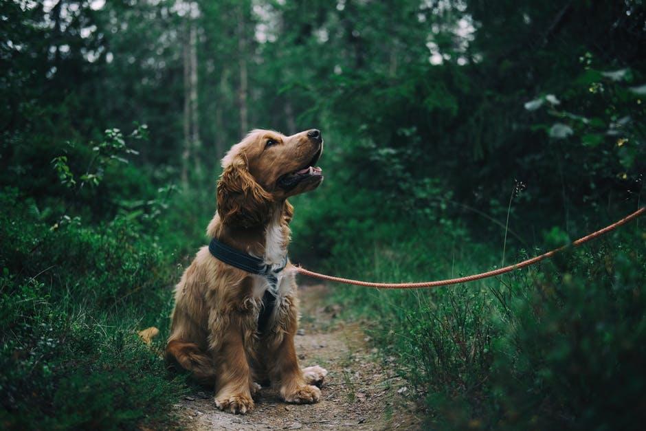 Can A Dog Get Poison Ivy 2.jpeg