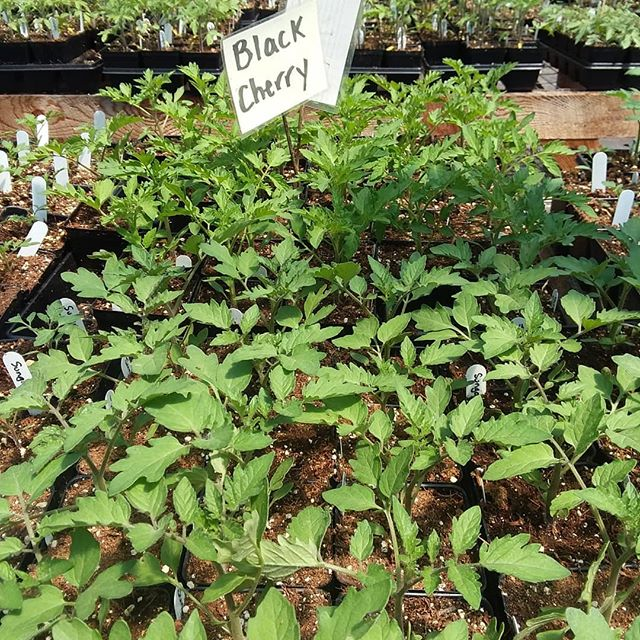 Open greenhouse this weekend 10am-3pm. Or, come see us at @keenefarmersmarket Saturday 9am - 1pm! #ruffledfeathersfarmnh #nhfarm #keenenh #keenefarmersmarket