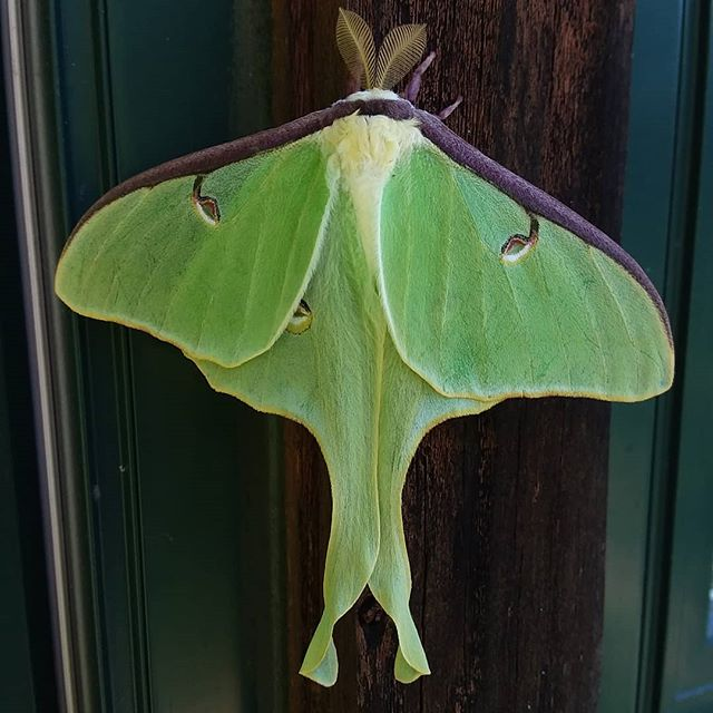 Haven't seen one of these beauties in quite some time. So pretty!