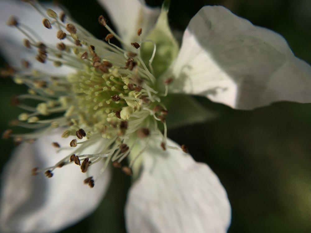 wild-flower.jpg