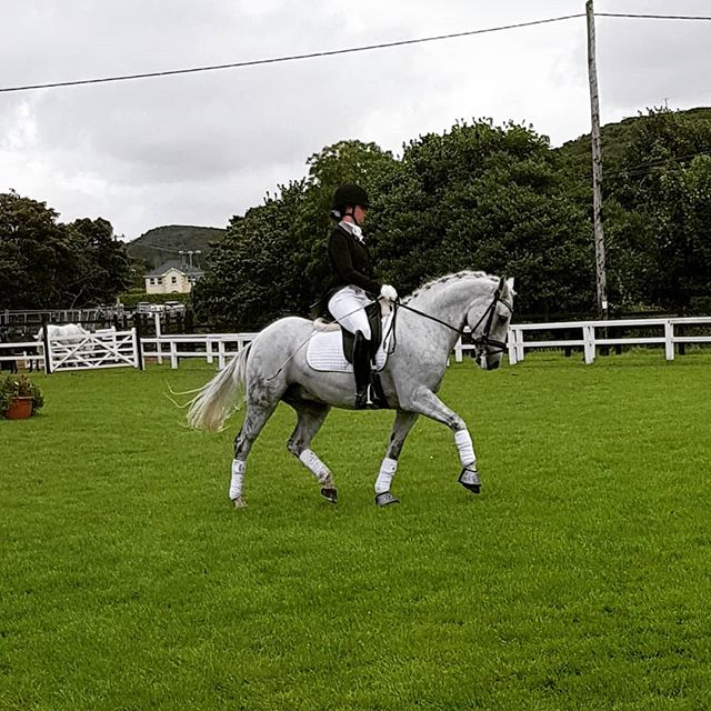 Beautiful dressage to music by Allanah Cazabon and @carnverdonboy at the Clifden Show today #connemarapony #connemara #dressage #clifdenshow2018 #clifdenshow #showday #superstar #poniesofinstagram #horsesoninstagram #instahorse #instapony #ponygoals
