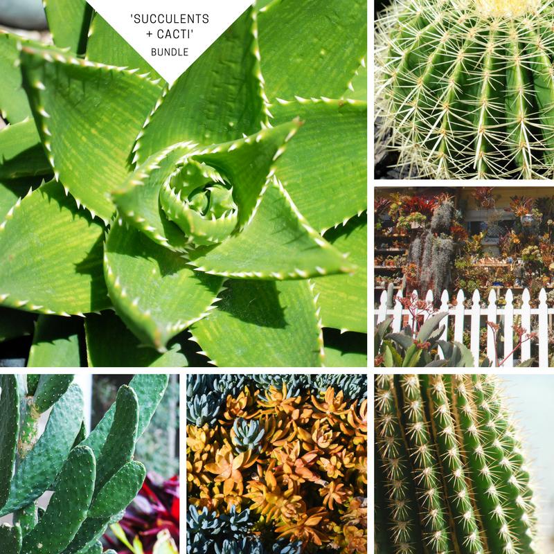 Succulents + Cacti.png