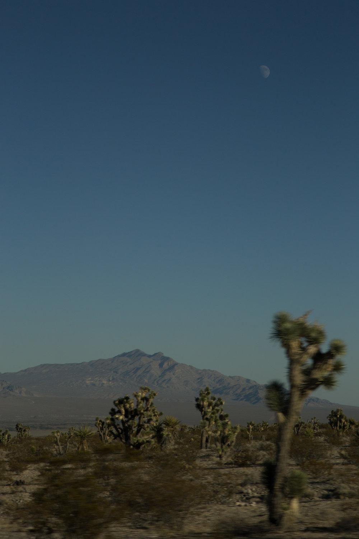 landscape_site_014.jpg