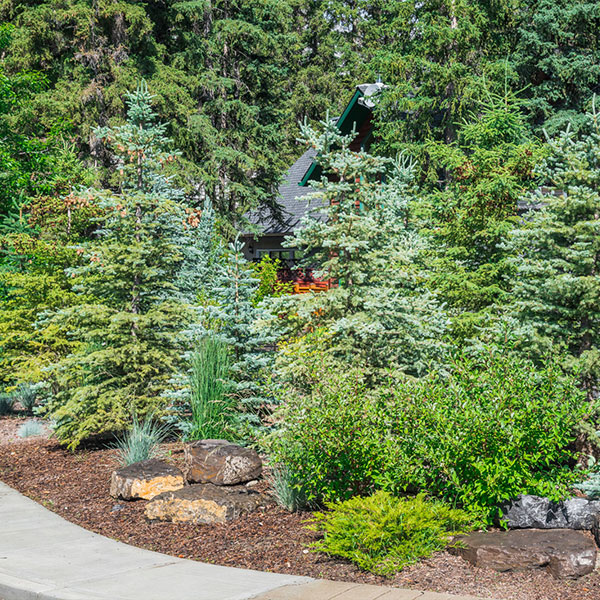 A backyard of a house surrounded by trees complete with a path and a landscaped garden in the Calgary and Banff area