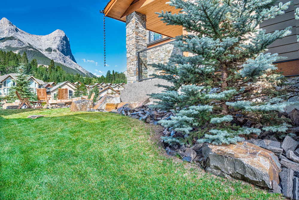A side yard featuring Colorado Spruce and Juniper shrubs in the Calgary and Banff area