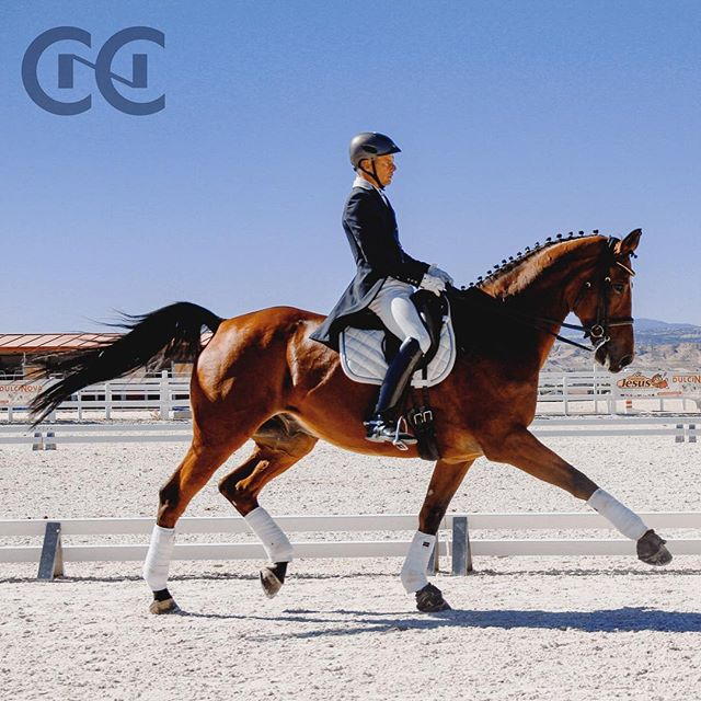 Nuestro Pepe @pepegermanmartinez y Davidoff! ¿Te gusta la doma? #cnc #dressage #domaclasica #caballos #horse #oldenburgo