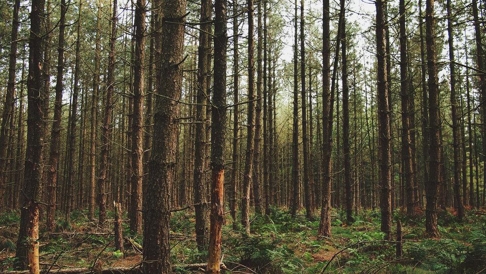 Stell dir vor, - es gäbe einen ganz einfachen Weg pro Jahr 2 Milliarden Kilo Holz zu sparen...