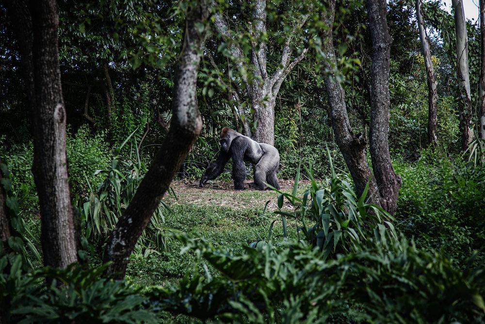 Ökosysteme zu zerstören? -