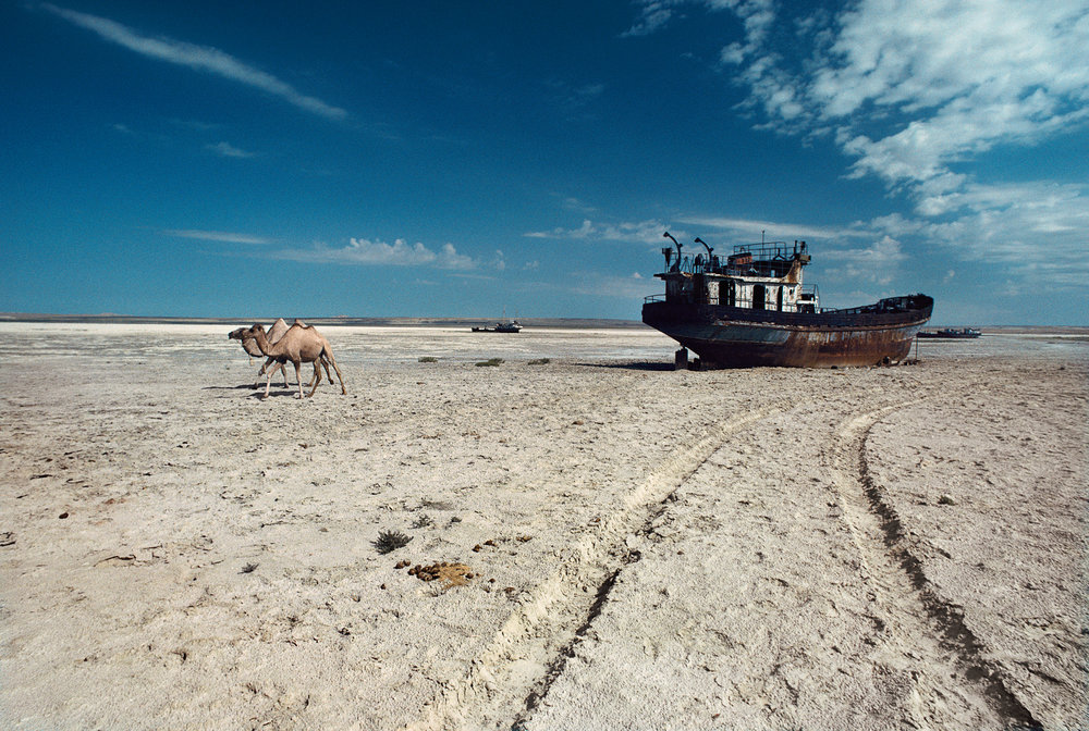 Camels cross the dry bed of the Aral Sea. Irrigation tapping into the lake's feeder rivers has shrunk its size and created this graveyard of rusting shipwrecks, where a beautiful bay once glistened.  Aral Sea, Kazakhstan