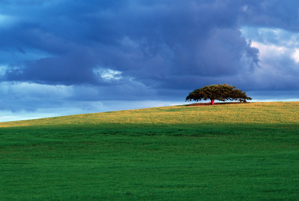 In the Midlands between Launceston and Campbelltown, a lone tree hovers over the hillside.  Launceston