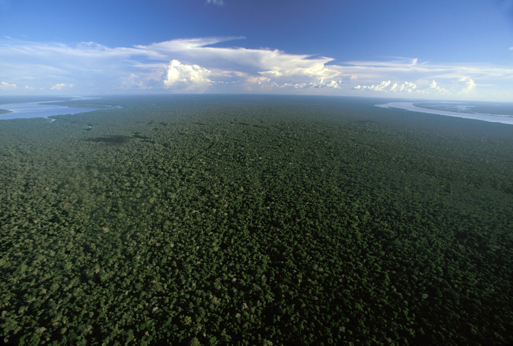 Aerial view of the Amazon Rainforest near Nova Olinda between the Rio Madera and Rio Canuma rivers.  Nova Olinda, Brazil