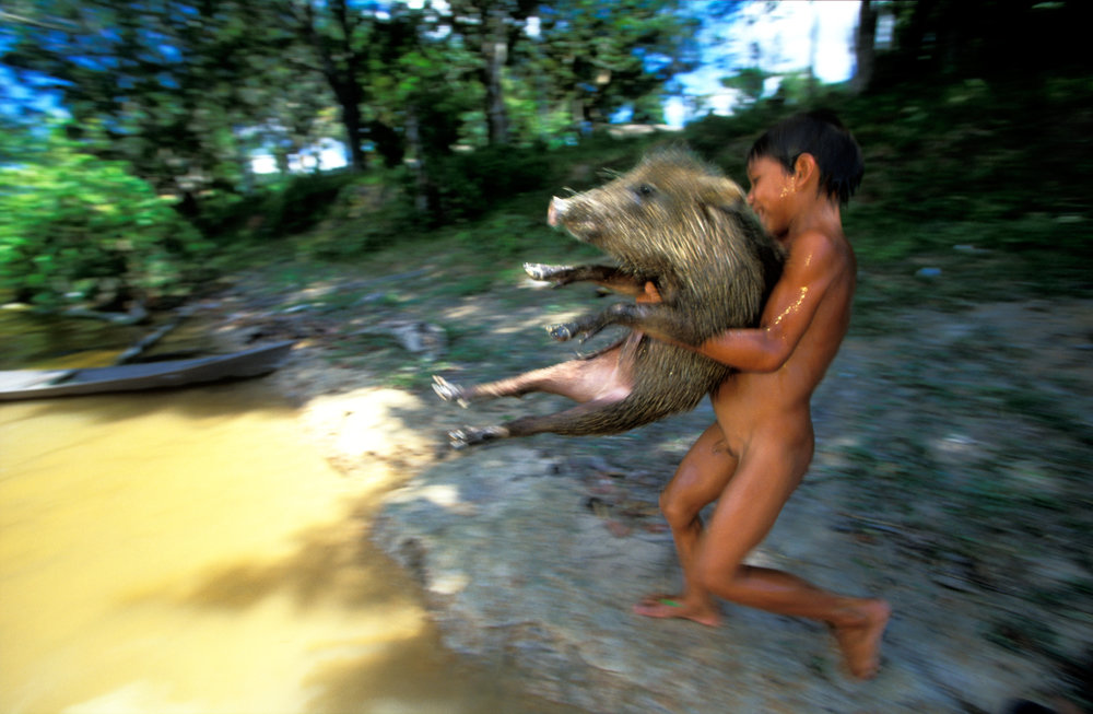 Hogwash: A boy tenderly takes his pet, a domesticated wild boar, for its daily cleansing swim in the Rio Canuma.  Kwata, Brazil