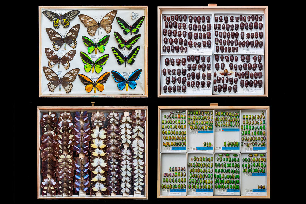 Millions of specimen are preserved in organized drawers, not visible to the public. The collections are so extensive that less than 1 in 5,000 specimen is exhibited, but they attract researchers from around the world.  Berlin, Germany.