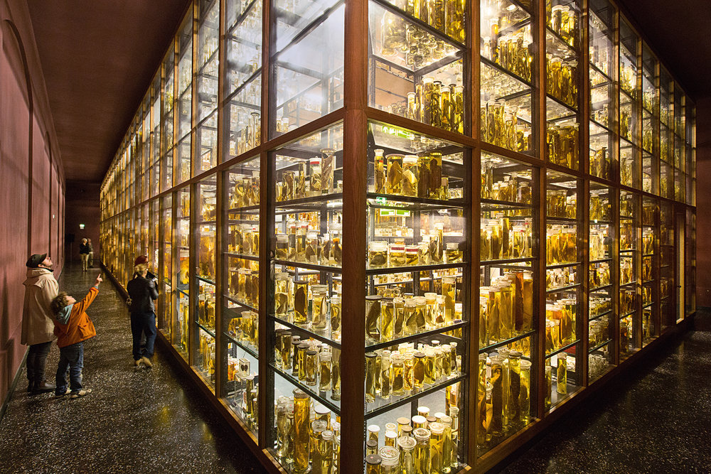 """The """"wet collection"""" is one of the most spectacular sections in the museum. More than 270,000 animal specimens are preserved in 80,000 liters of alcohol.  Berlin, Germany."""