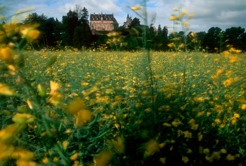 Blossoms fill the fields around Eisenbach Castle.  Eisenbach castle, Lauterbach, Germany