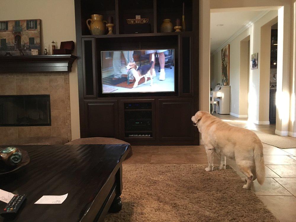 Allee Watching TV.jpg