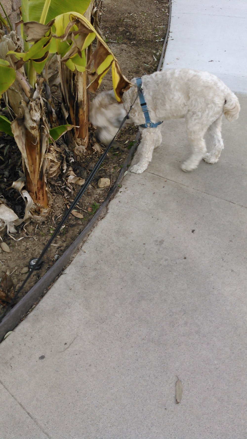Bailey on walk.jpg