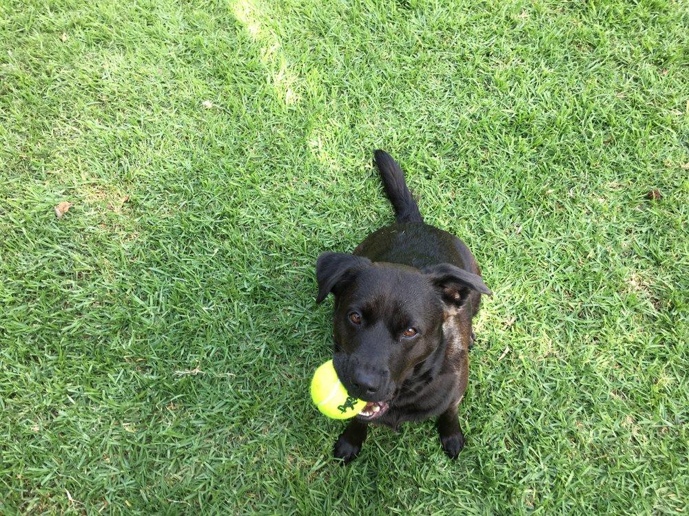 Bailey with ball.JPG